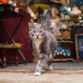 Очаровательные коты, проживающие в общественных учреждениях Нью-Йорка