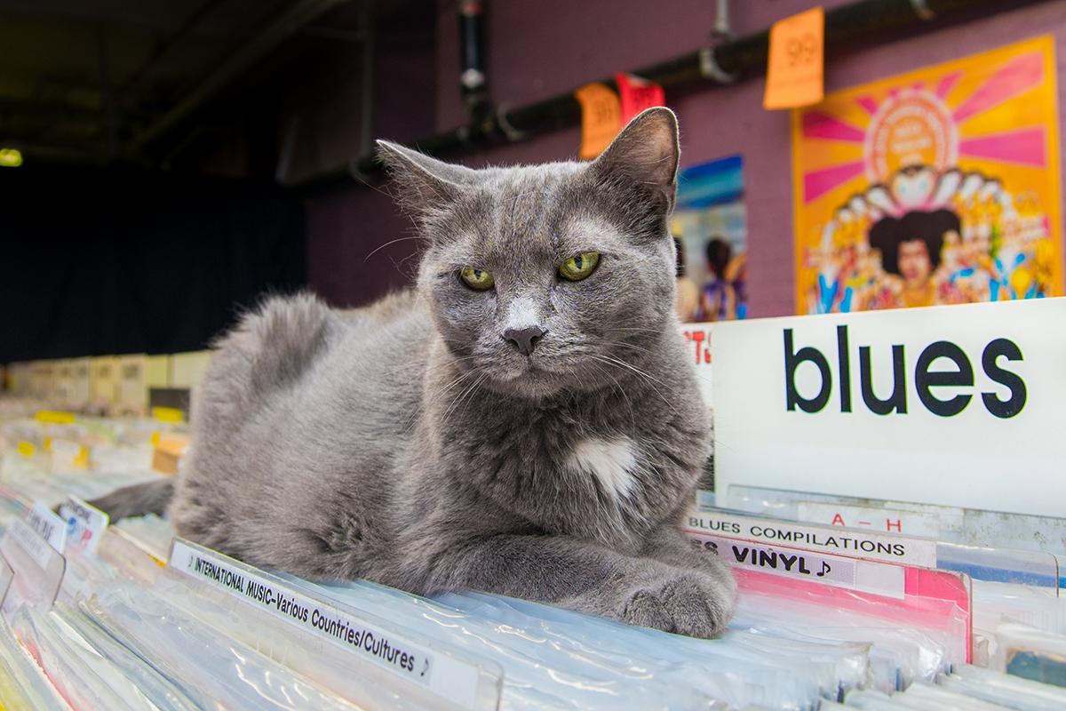 Очаровательные коты, Shop Cats of New York