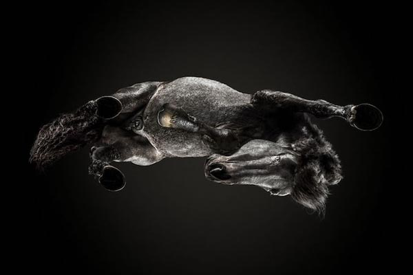 Красота лошадей с иного ракурса в проекте Андрюса Бурба