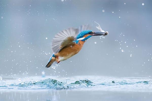 Победители международного юношеского фотоконкурса дикой природы