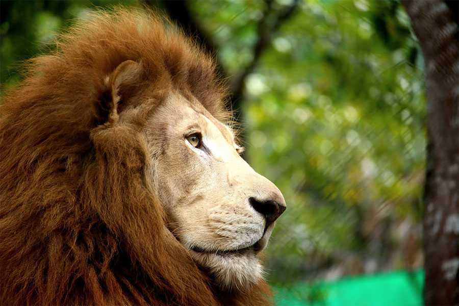 Международный юношеский фотоконкурс дикой природы Through young eyes