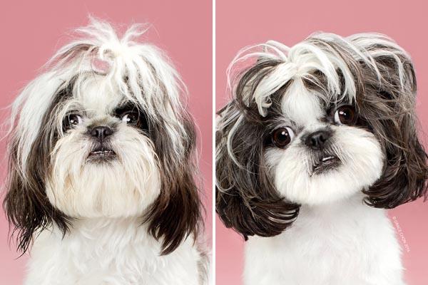 Очаровательные портреты собак до и после стрижки