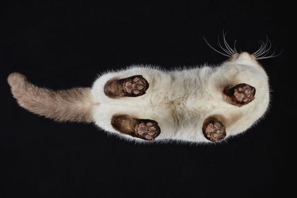Прелестные фотографии кошек с иного ракурса от Андрюса Бурба