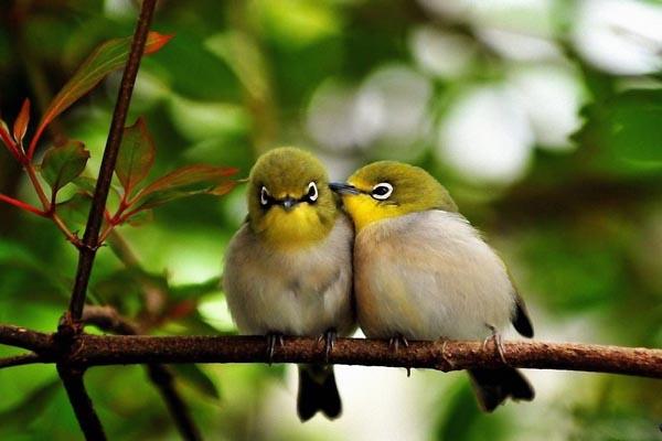 40 занимательных фактов о птицах