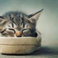 40 интересных фактов о кошках
