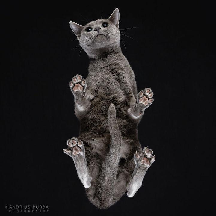 Underlook, Under-Cats, фотографии кошек снизу, Андрюс Бурба, Andrius Burba