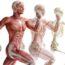 50 удивительных фактов о человеческом теле