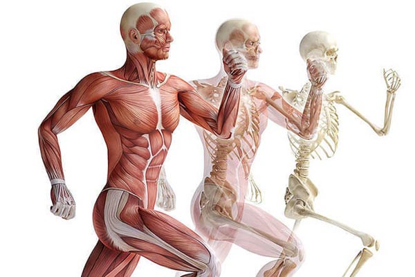 40 удивительных фактов о человеческом теле