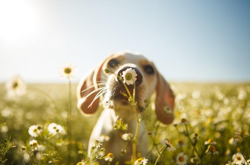 конкурс фотографии собак Dog Photographer Of The Year 2017