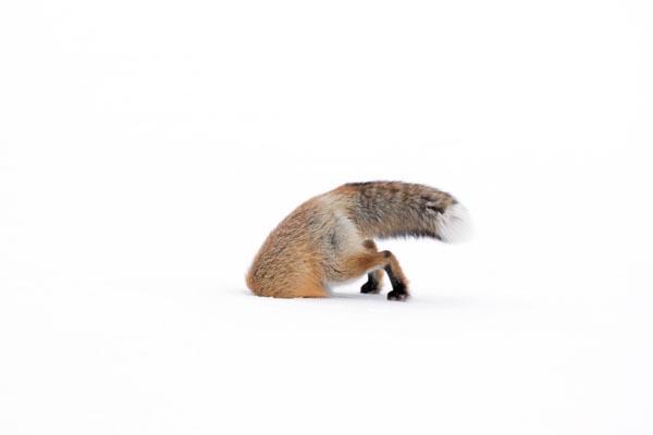 Победители конкурса фотографии Wildlife Photographer of the Year 2017