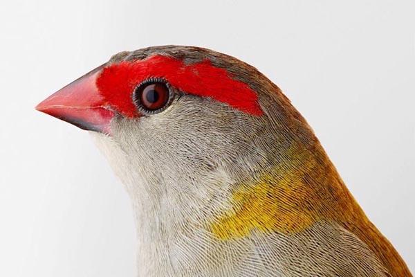 Элегантные портреты птиц в фотографиях Лейлы Джеффрис