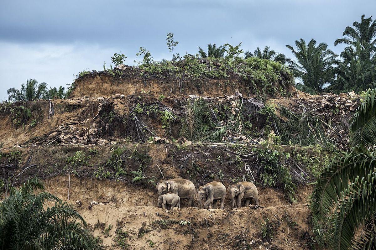 Победитель в номинации«Фотожурналист дикой природы». ФотографAaron 'Bertie' Gekoski, Великобритания/США