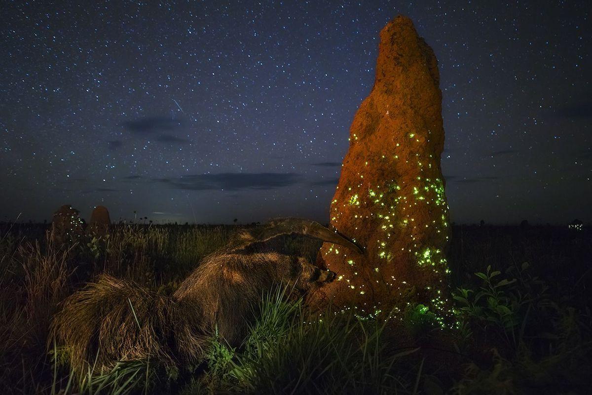 Победитель в номинации«Животные в дикой среде». ФотографMarcio Cabral, Бразилия