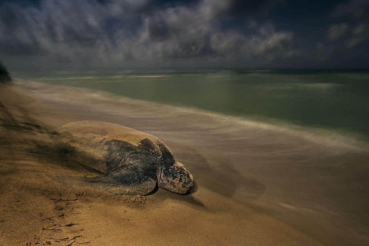 Победитель в номинации«Поведение: амфибии и рептилии». ФотографBrian Skerry, США
