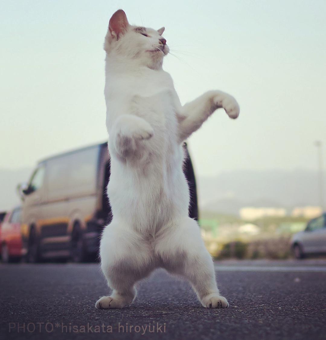 Жизнь «котов-ниндзя»: забавный проект Хисакаты Хироюки