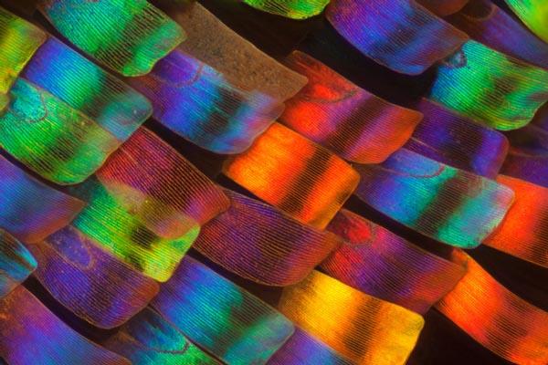 Потрясающие фотографии крыльев бабочек под микроскопом