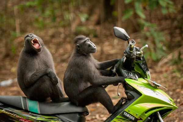 Победители юмористического конкурса Comedy Wildlife Photography Awards 2017