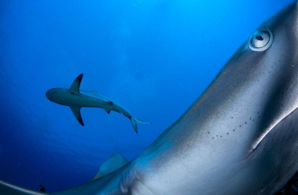 2-е место в категории«Под водой»: фотографShane Gross
