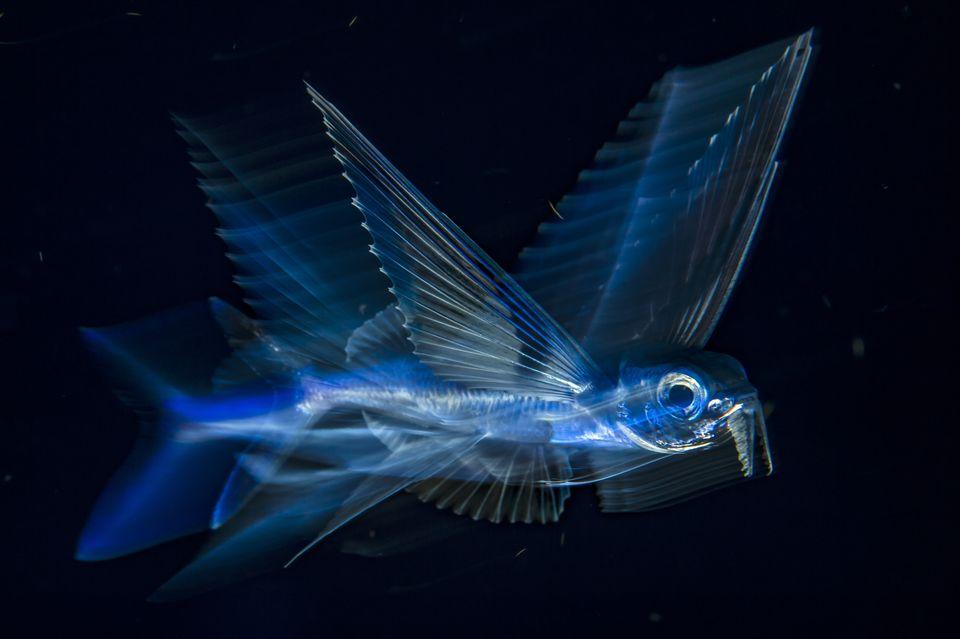 3-е место в категории«Под водой»: фотографMichael O'Neill