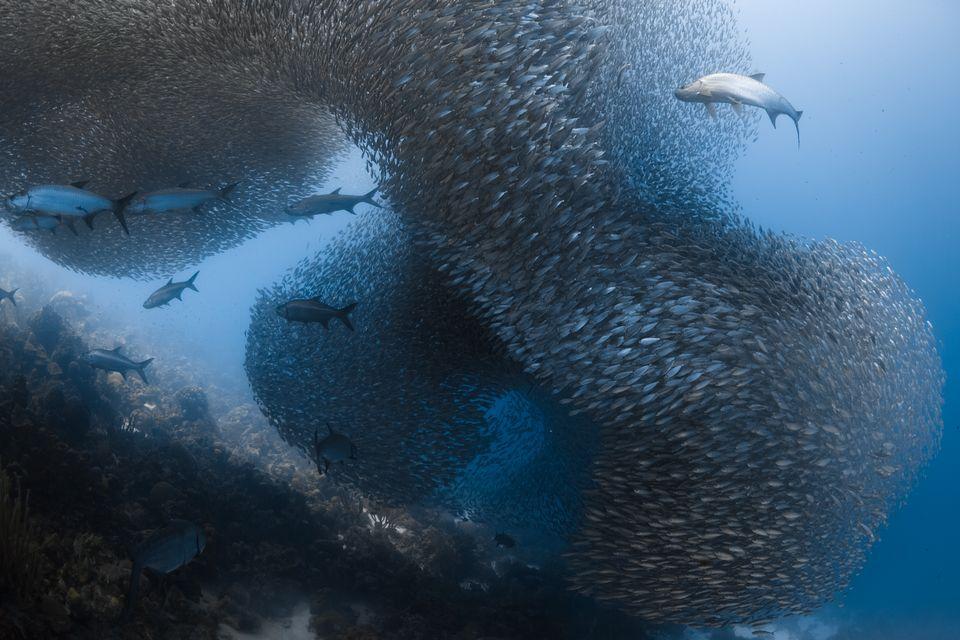 Высокая оценка в категории«Под водой»: фотографMichael Oneill