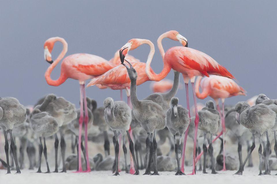 2-е место в категории«Дикая природа»: фотографAlejandro Prieto