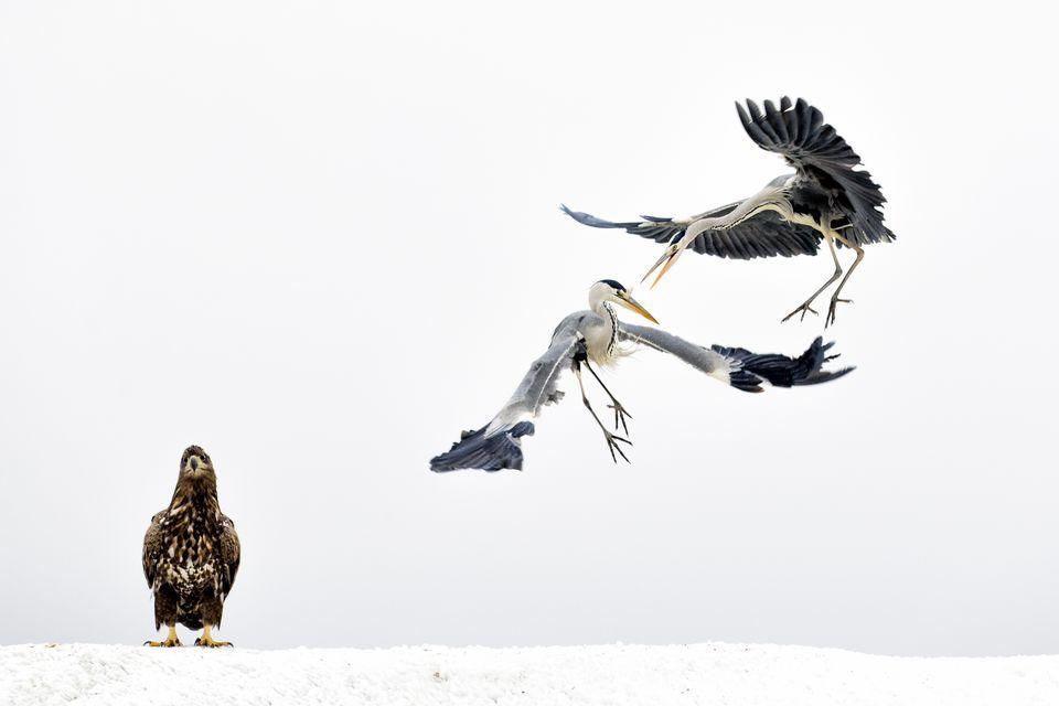 3-е место в категории«Дикая природа»: фотограф Bence Máté