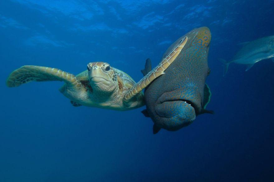 Победитель в категории «Под водой»: фотографTroy Mayne
