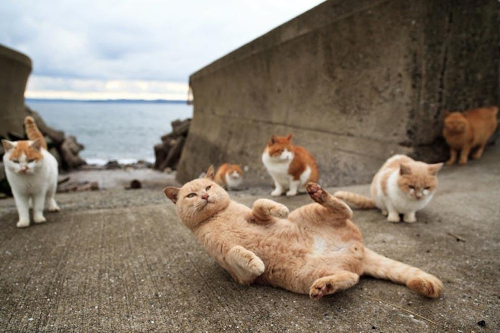 Кролики, свинки и не только: 7 островов, которыми правят животные