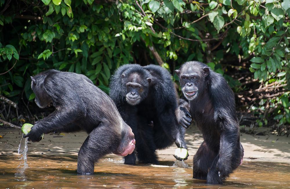 Остров обезьян, Либерия