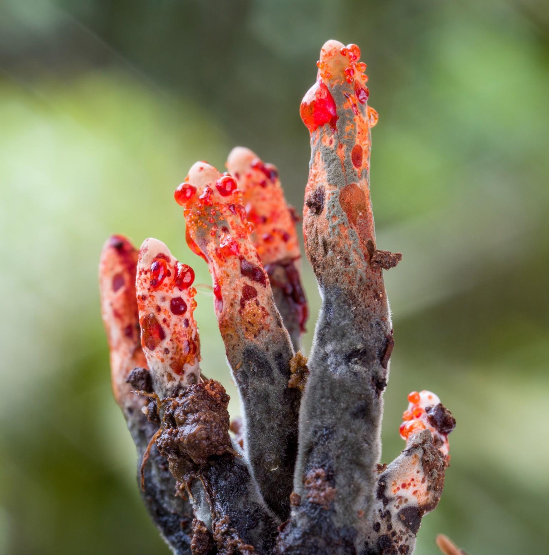 Фотографии редких и неизвестных грибов в тропических лесах Эквадора