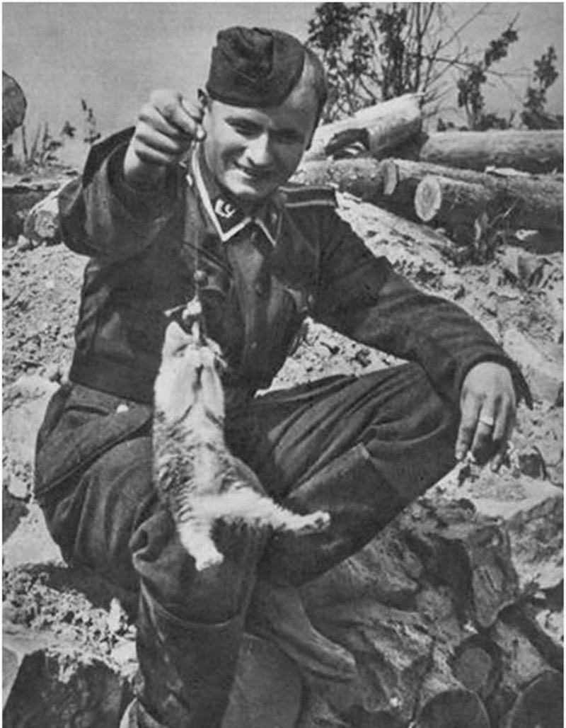 Дружба между кошками и солдатами в старинных фотографиях