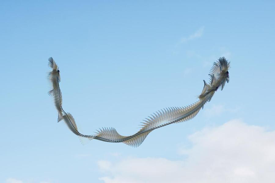 Что, если бы птицы оставляли следы в небе?