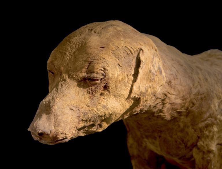 Мумия собаки