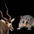 10 самых редких животных на Земле