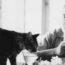 Старинные фотографии Эрнеста Хемингуэя с его любимыми кошками