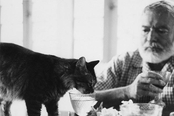 Эрнест Хемингуэй с его любимыми кошками — старинные фотографии