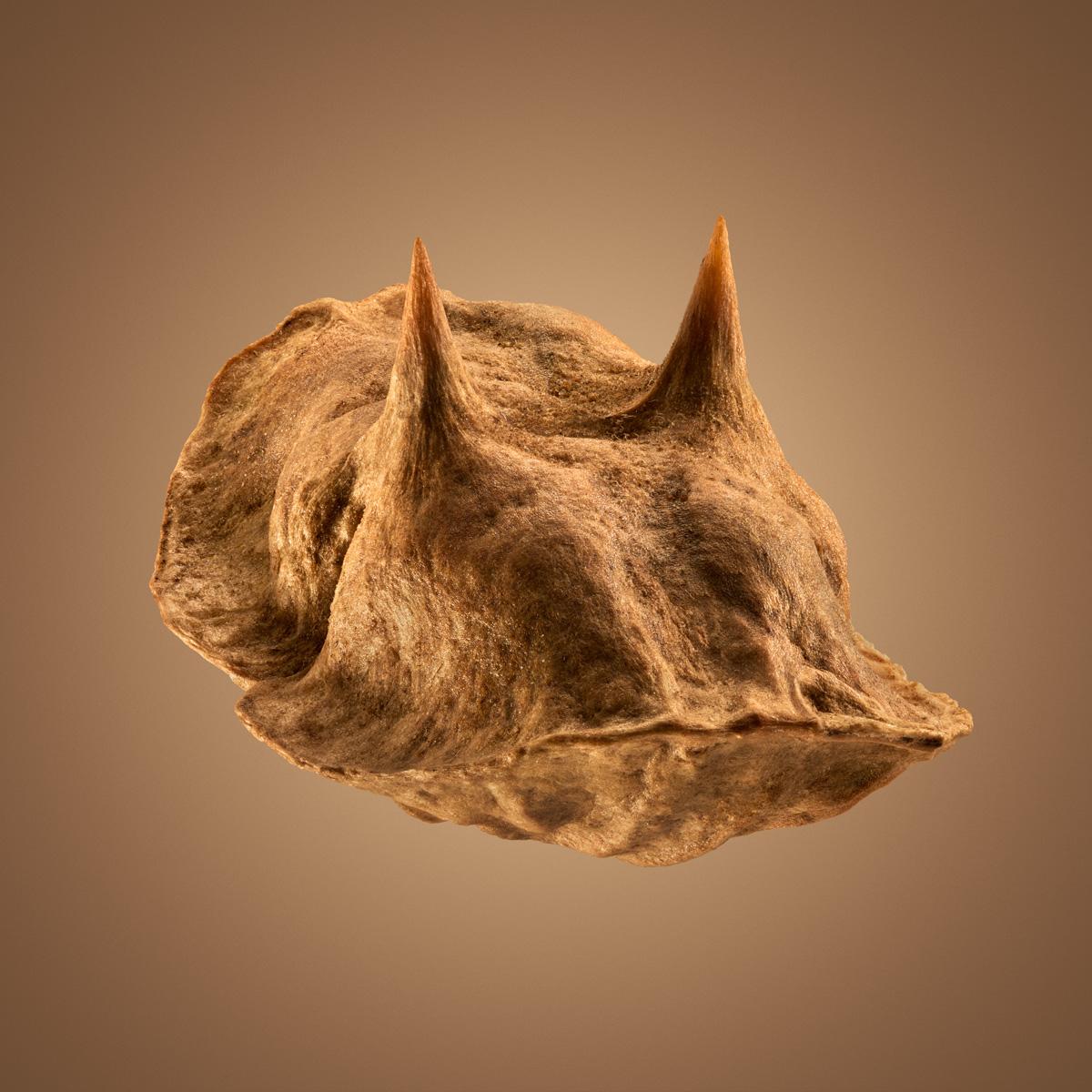 Удивительные детали экзотических семян под микроскопом