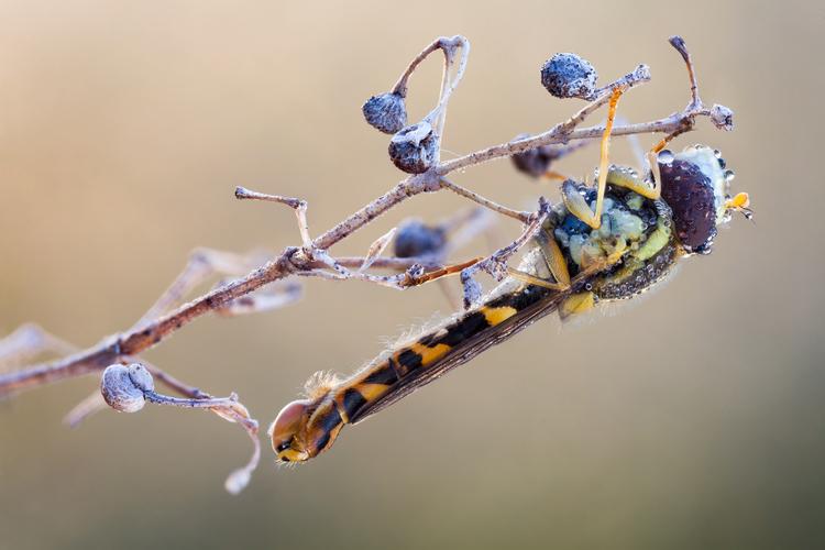 Удивительный мир насекомых в макро-фотографиях Джона Халлмена