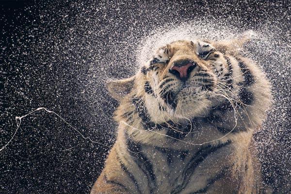 Вымирающие виды животных в фотографиях Тима Флэча
