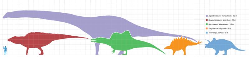 Сравнение размеров крупнейших динозавров