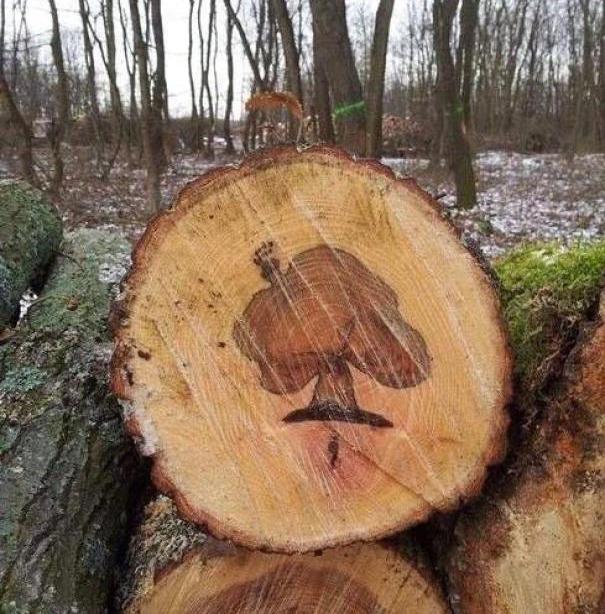 Образ дерева внутри дерева