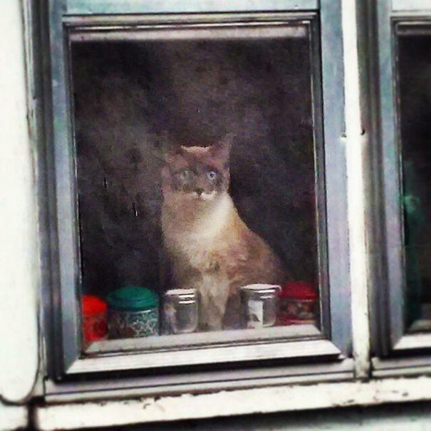«Мой друг сфотографировал кота, сидящего за грязным стеклом, с помощью фиговой камеры на телефоне. В итоге фотография стала похожа на картину»