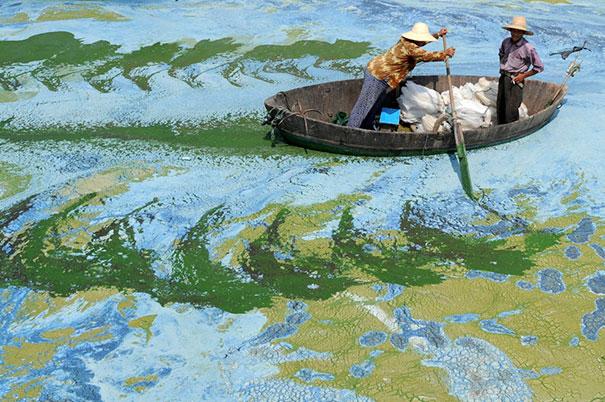 Водоросли на поверхности озера в Китае выглядит как картина импрессиониста