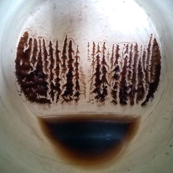 Кофейная гуща превратилась в еловый лес
