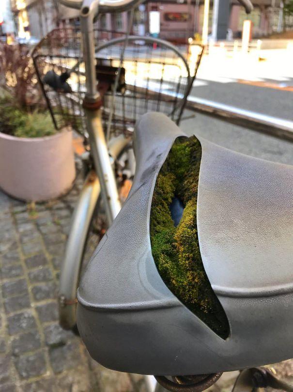 Проросший мох в седле старого велосипеда