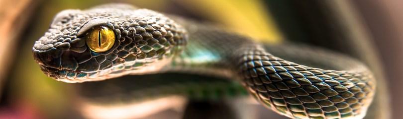 30 любопытных фактов о змеях