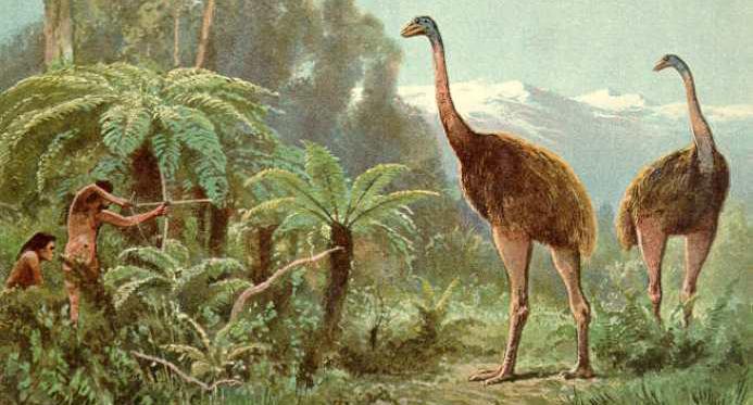 Травоядные птицы моа