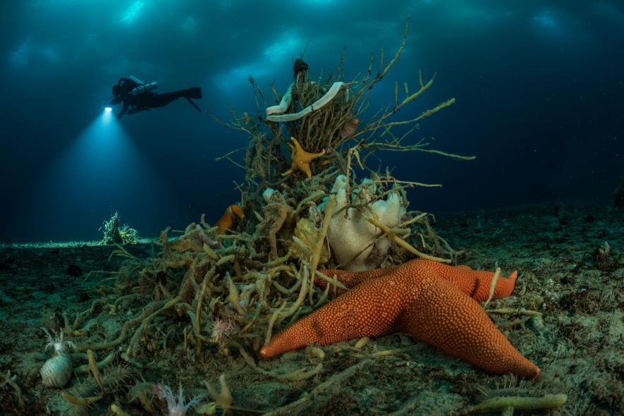 Морская звезда и червь parborlasia corrugatus