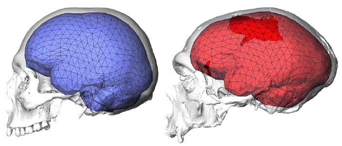 Современный человек и неандерталец