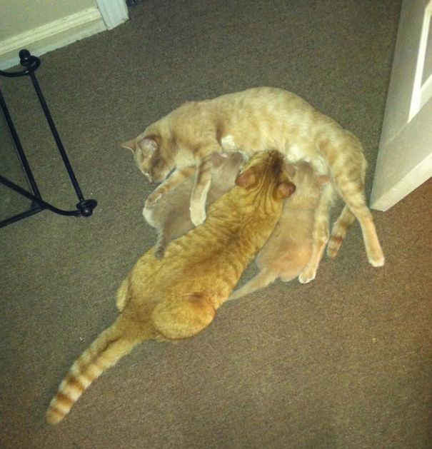 40 котов, у которых своя логика действительности